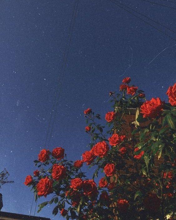 Aesthetic Rose Tumblr Aesthetic 90S Night - Gonzagasports
