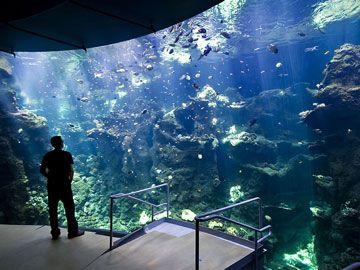 169 Best Images About Aquariums On Pinterest Underwater