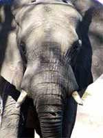 Elefante encadenado- Jorge Bucay