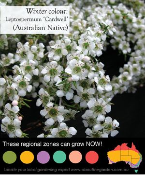 queensland native flowers - Google Search