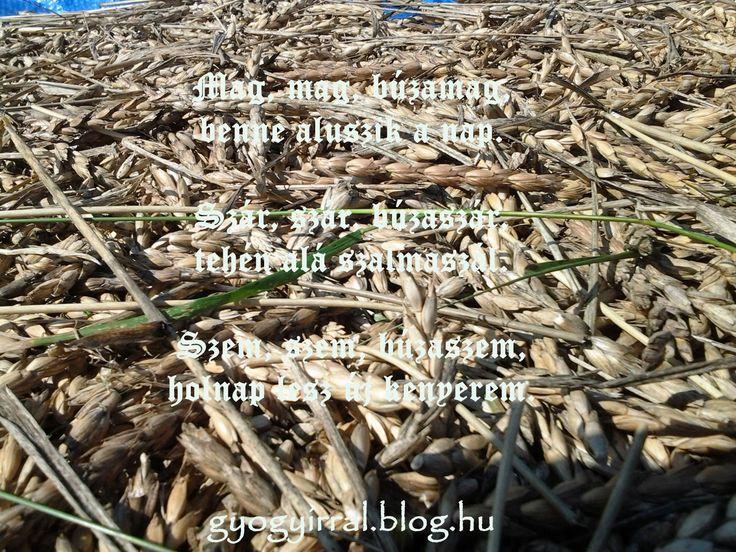 Kézi aratás