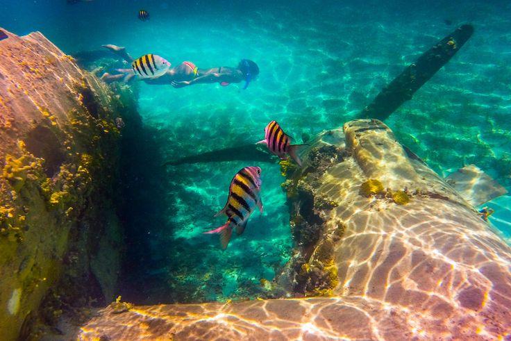 Normans Cay Exuma Adventure from Nassau