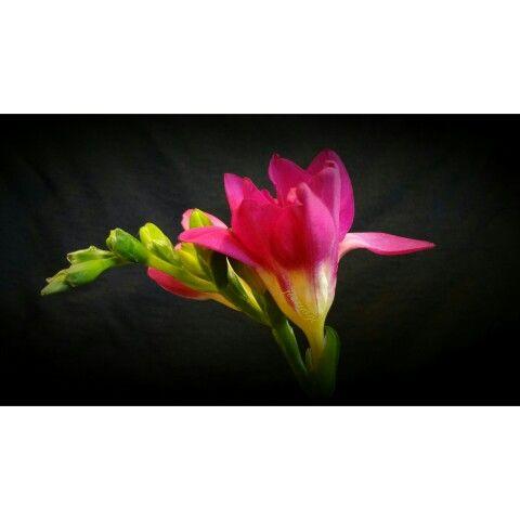 Flower Photo macro photo