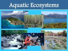 Aquatic Ecosystems :   An aquatic ecosystem is an ecosystem in a river. Areas of creatures that are dependent on each other and on their atmosphere exist in aquatic ecosystems. The two main types of ecosystem are marine and fresh water ecosystems.