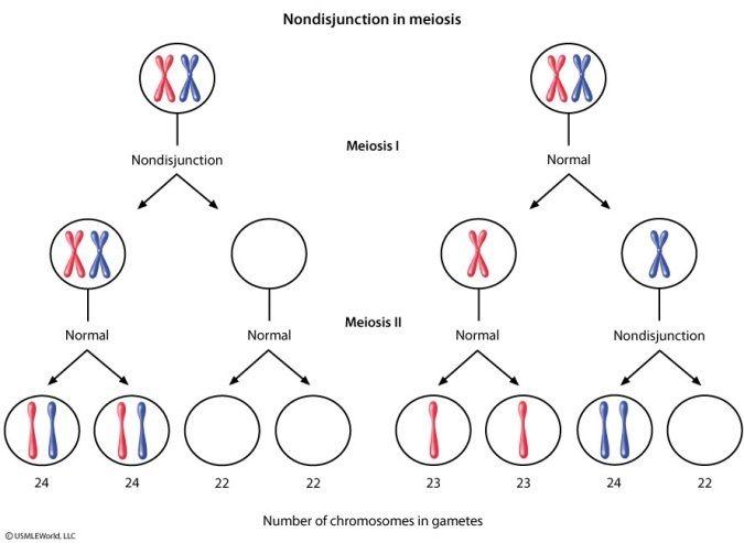 nondisjunction in meiosis