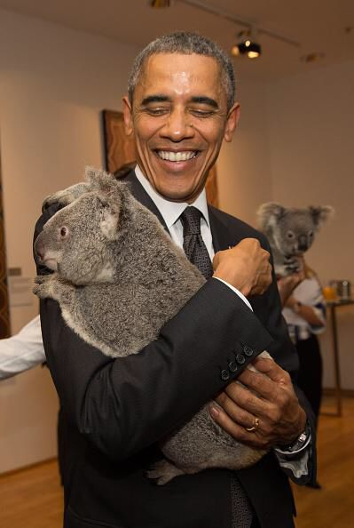 President Obama get a bear hug from an Australian Koala Bear.