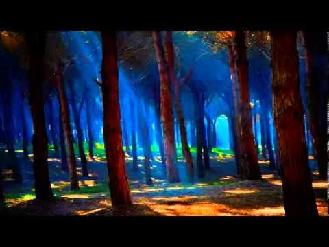 Cricket and frog sounds 8 hours of nature forest sounds full night relax - YouTube