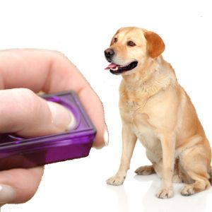 What Is a Clicker and Why Use One? An Introduction to Event Markers from LTHQ: http://www.labradortraininghq.com/labrador-training/what-is-a-clicker-and-why-use-one/