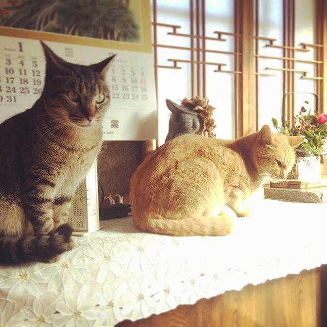 玄関の置物になることがある。 日向ぼっこのつもりなのか。  #にゃんすたぐらむ #猫#愛猫#猫部#実家の玄関は猫 #welcomecat #玄関の置物