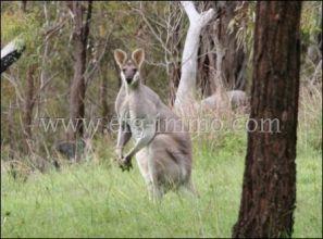 Australien für Auswanderer Natur Tourismus Pferde Ranch mit 55,82 ha Land zum Kauf