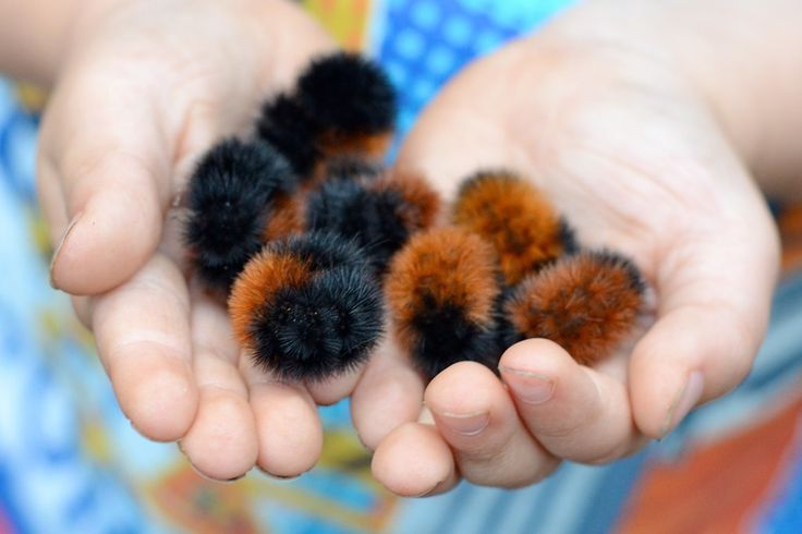 I used to find these all over as a kid and never knew what they were named: Woolly bear caterpillars. I think the name is perfect!