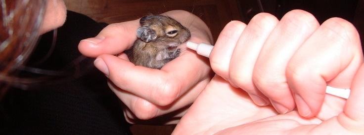 Sok sok hasznos információ állatorvosok tollából