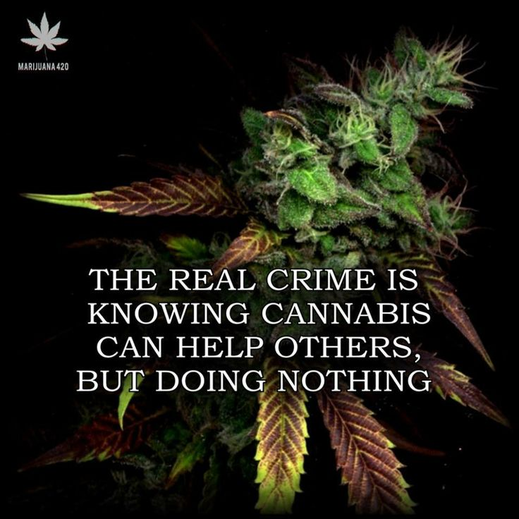 Image result for marijuana quotes