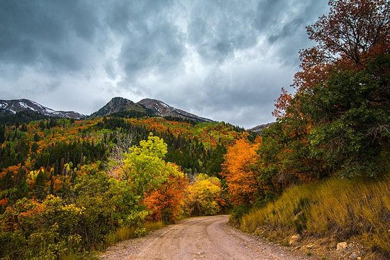 Fall Autumn Leaves, Utah Photography, American Fork Canyon, Silver Lake Road, Box Elder Peak, Wasatch Mountains, Print Photo, Rustic Decor