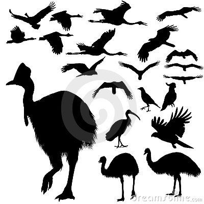 australian-birds-silhouettes-17929666.jpg (400×400)
