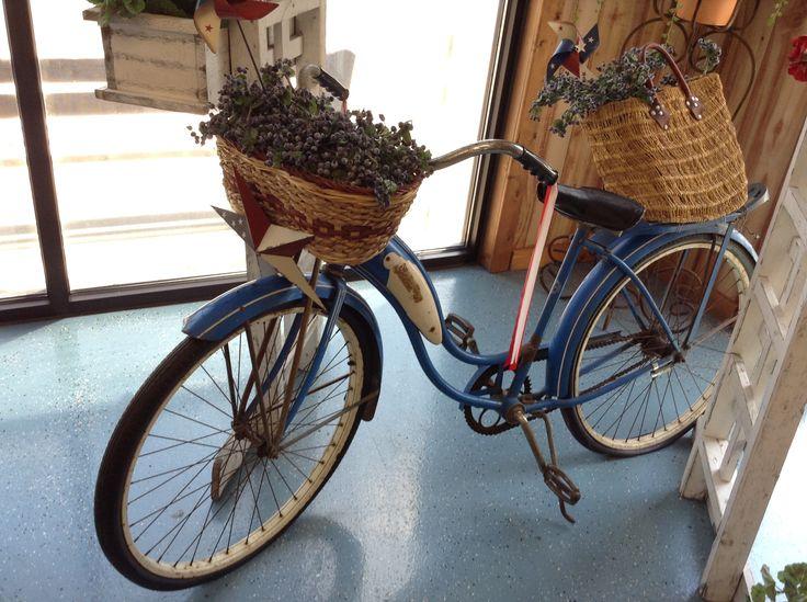 A blueberry vitage bike! <3 LeDuc Blueberry Farm, Michigan