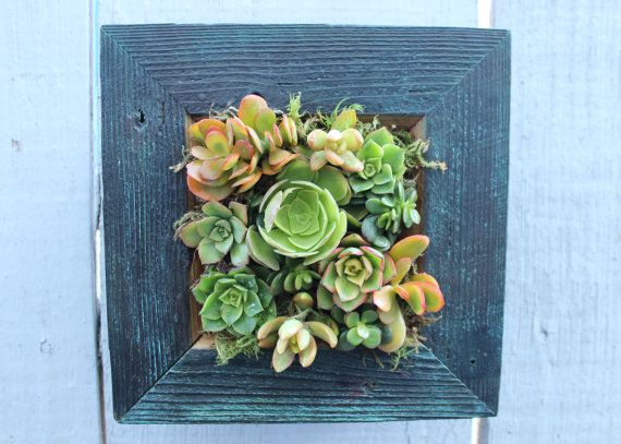 Make Your Own DIY Indoor/Outdoor Succulent Living Wall. Handmade Reclaimed  Wood Distressed With