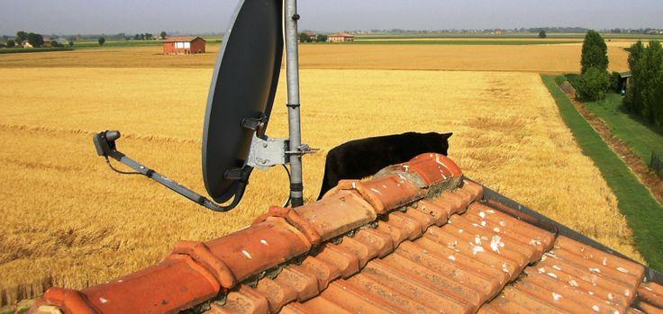 Lanera esplora il tetto di casa
