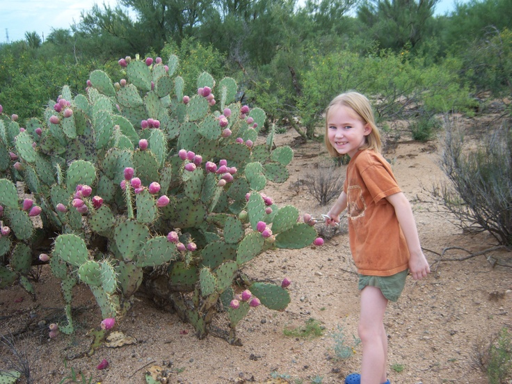 Prickly Pear Fruit Harvesting 4