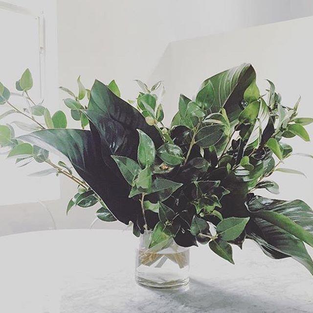 Green and clean.  #grandiflora #Sunday rg @montarnamcdonald