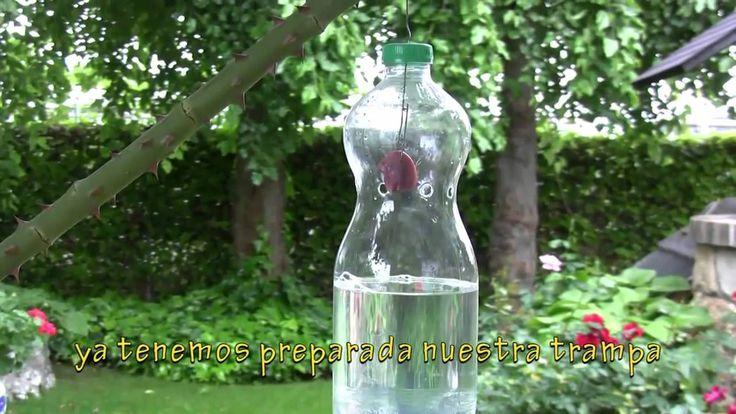 Armadilha matar moscas e mosquitos com agua e garrafa Pet