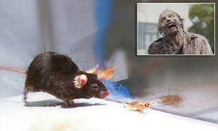 Optogenetic Implants? Zombie Army For Your Evil Bidding? Researchers at Yale University in New Haven Connecticut, used optogenetics to 'switch on' circuits in the brains of mice and trigger aggressive behaviour.
