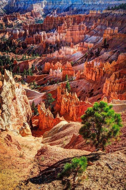 Bryce Canyon National Park is a national park located in southwestern Utah in the United States. The major feature of the park is Bryce Canyon which, despite its name, is not a canyon but a collection of giant natural amphitheaters along the eastern side of the Paunsaugunt Plateau. Bryce is distinctive due to geological structures called hoodoos, formed by frost weathering and stream erosion of the river and lake bed sedimentary rocks.