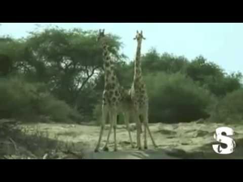 Animali parlanti e da morire dalle risate - YouTube