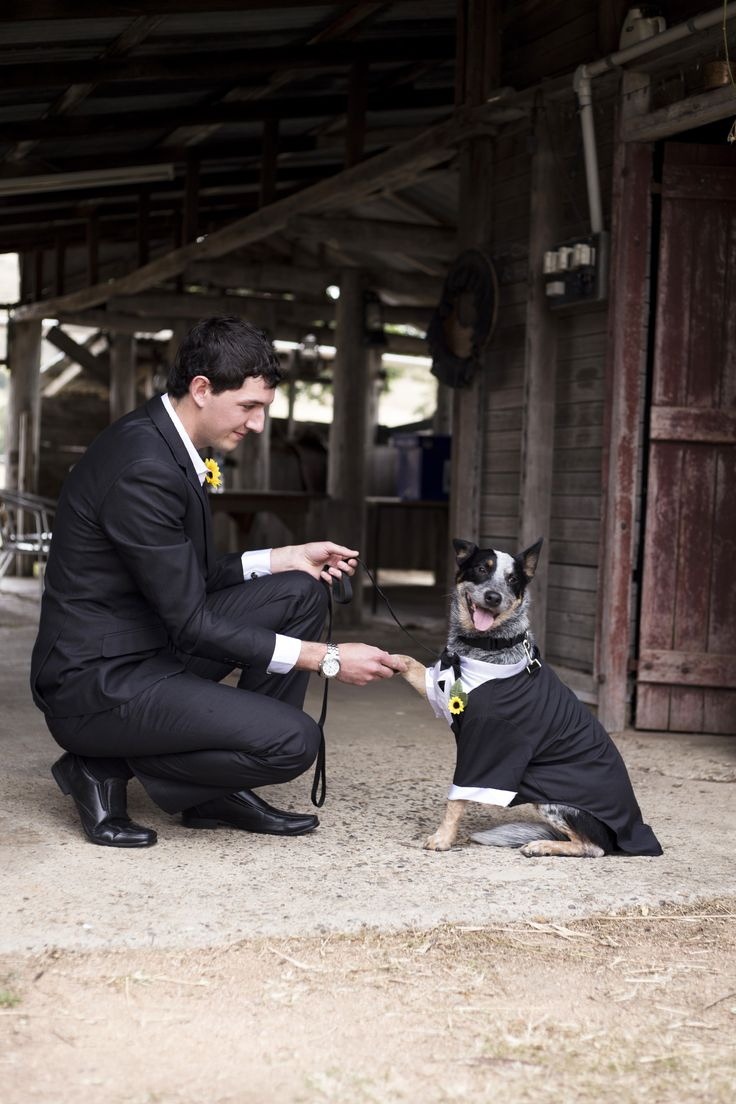 Groom and his Best Man / Page Boy. Dogs at weddings. Country wedding.