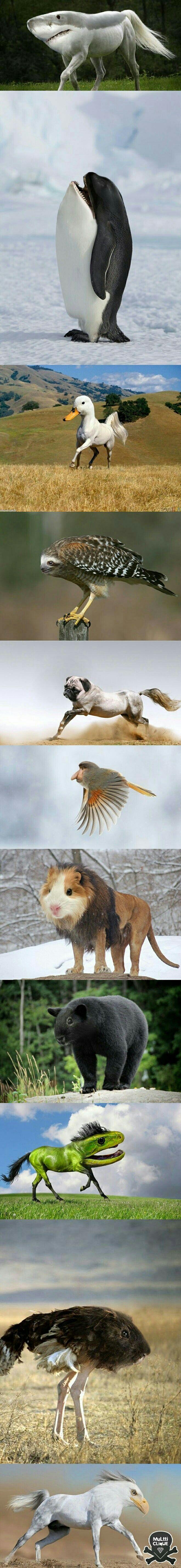 Ha! I love the guinea pig/lion