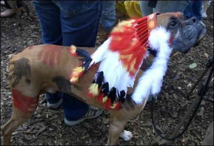 Indian/Native American Boxer Dog Costume....hilarious!