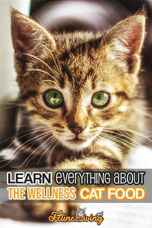 Felineliving Net Kitten Care Cats Cat Food Reviews
