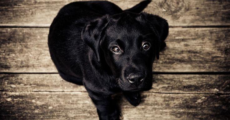 Free stock photo of wood, animal, dog