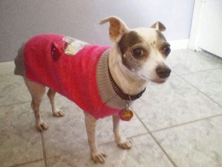 Pretty Gigi wearing her sweater today. The North decided to send the South some weather.
