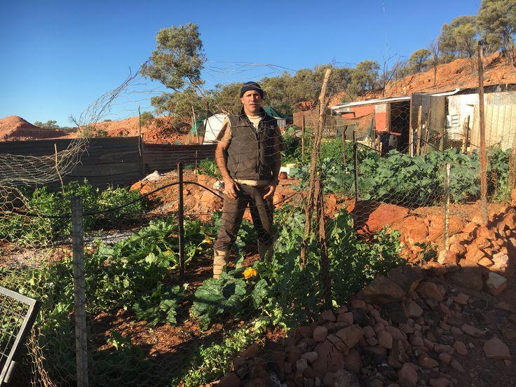 Garden out on the opal fields 2016