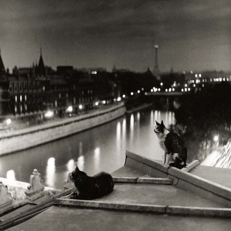 Robert Doisneau - Les chats de Paris la nuit