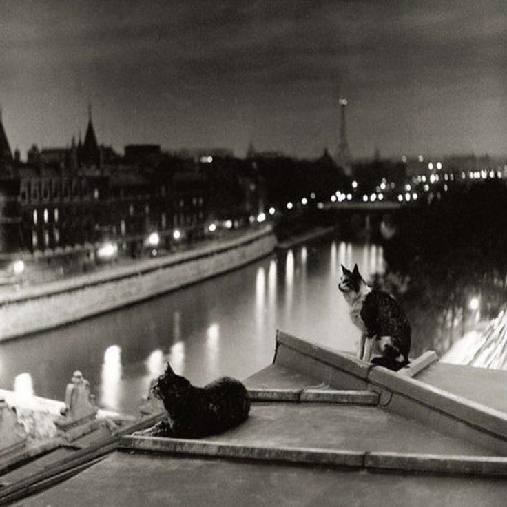 Robert Doisneau, Paris Cats at Night ~Via Renato Rauld Etcheverry