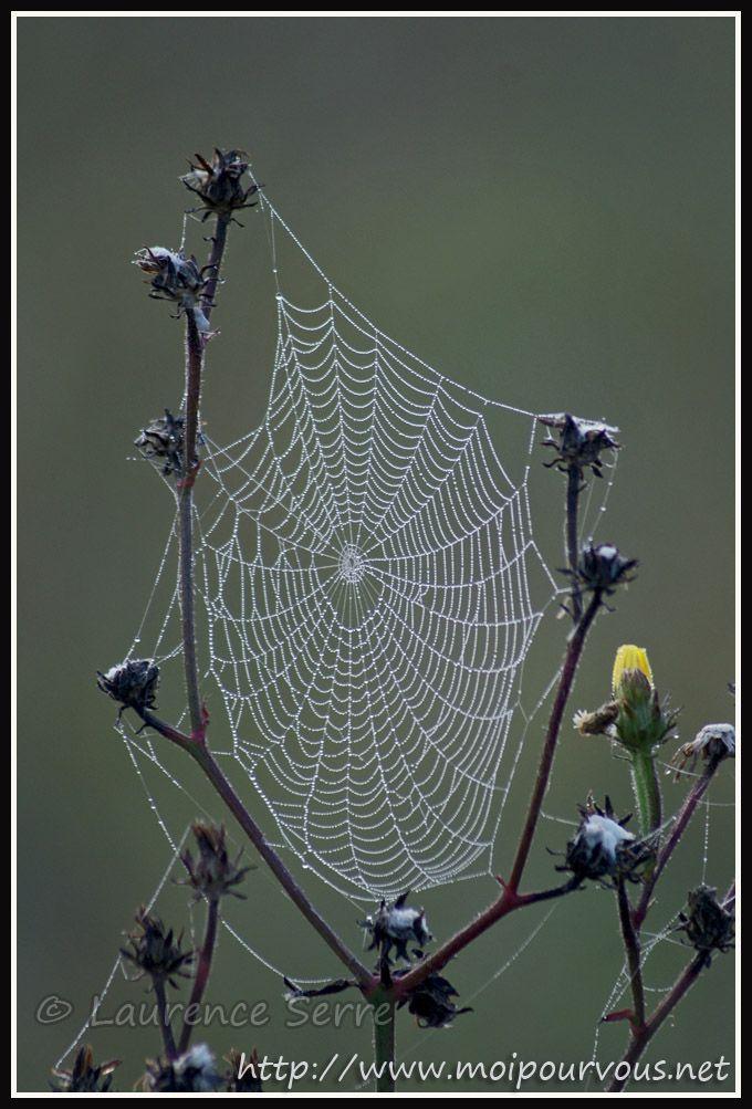 les 17 meilleures id 233 es de la cat 233 gorie d araign 233 e sur toiles d araign 233 e de