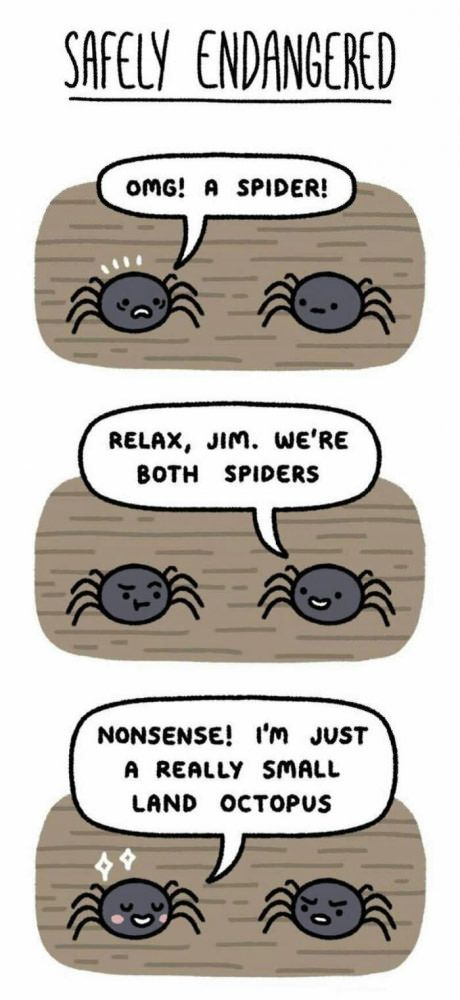 This is what i need to tell my self whenever I see a spider... A beautiful land octopus xD