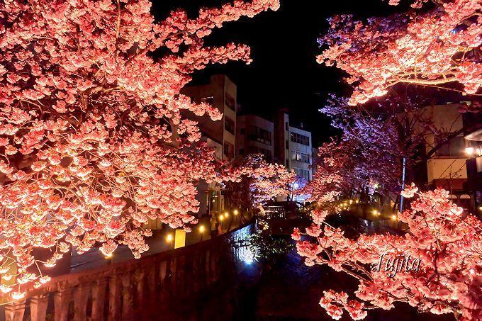 梅より見頃が早い!熱海温泉「糸川桜まつり」早春の花見と夜桜ライトアップ | 静岡県 | トラベルjp<たびねす>