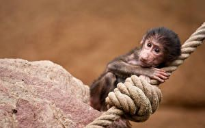 Affen Jungtiere Tiere