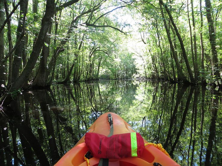 Blackwater Cypress Kayak Tour - Southport, NC http://kayak-tours.lighthousewatersports.com/southport-things-to-do.html