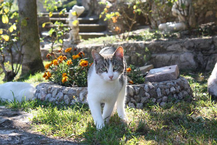 Gatito paseando por Gossol, Lleida