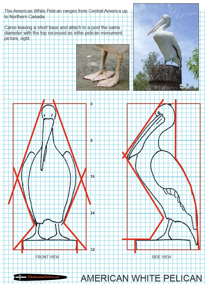 Chainsaw carving patterns free American White Pelican. https://www.facebook.com/Bill.Sculptures.tronconneuse.Quebec