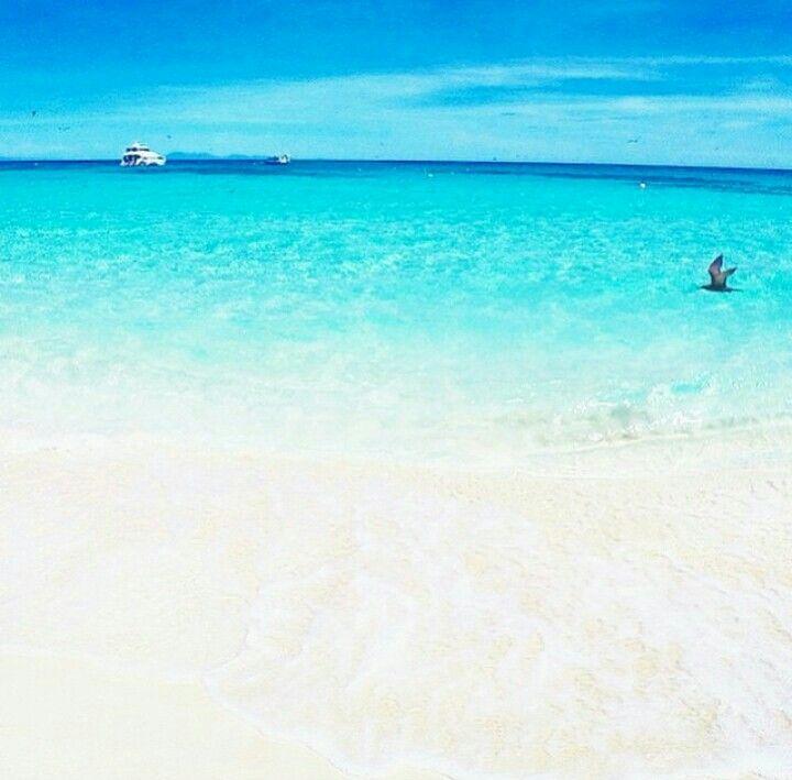 Michaelmas Cay, Australia
