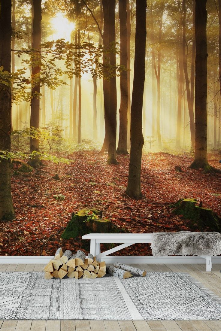 90 best forest wall murals images on pinterest photo wallpaper autumn forest wall mural wallpaper amipublicfo Images