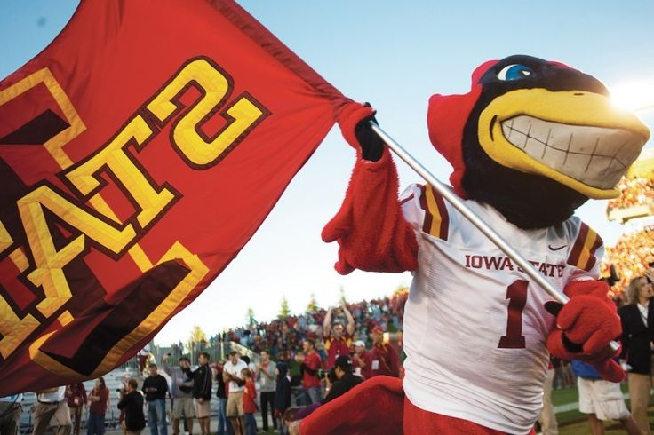 Iowa State University Cyclones. Cy the Cyclone. Since a cyclone was difficult to depict in costume, a cardinal was selected from the cardinal and gold of the official school colors. A cardinal-like bird was introduced at the 1954 homecoming pep rally. A contest was conducted to select a name for the mascot, and the winning entry of Cy was submitted by 17 people. The first to submit the name, Mrs. Ed Ohlsen, won a cardinal and gold stadium blanket.