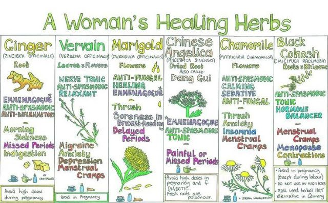 "Many herbs are believed to have healing benefits to both men and women.  Some herbs are specifically useful to women in addressing certain health issues such as pregnancy, mensuration, menopause and hormone balance.  This infographic entitled ""A Woman's Healing Herbs"" beautifully illustrates six herbs that are thought to be particularly beneficially to women.  These herbs include:  Ginger Vervain Marigold Chinese Angelica Chamomile Black Cohosh"