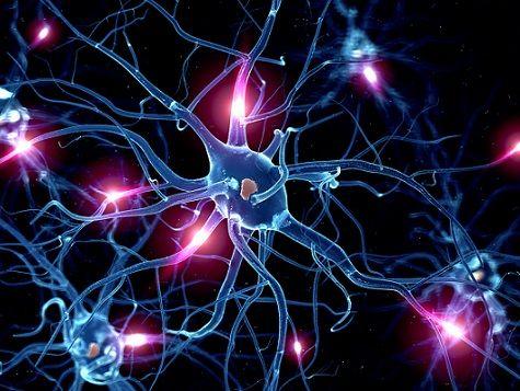 Se denomina como sinapsis al mecanismo de comunicación entre dos o más neuronas, con el fin de transmitir un impulso nervioso destinado a coordinar una función en el organismo.