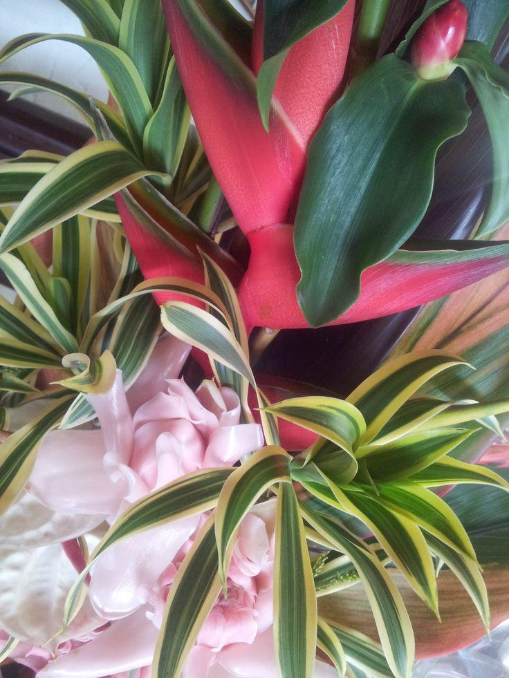 Exquisite tropicals #thalabeachlodge